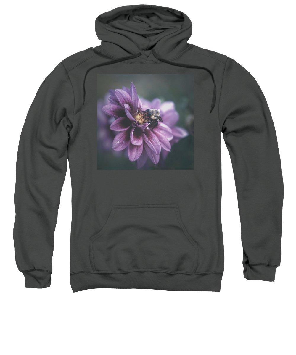Flower Bee Nature Beauty Sweatshirt featuring the photograph Nectar by Becca Stauffer