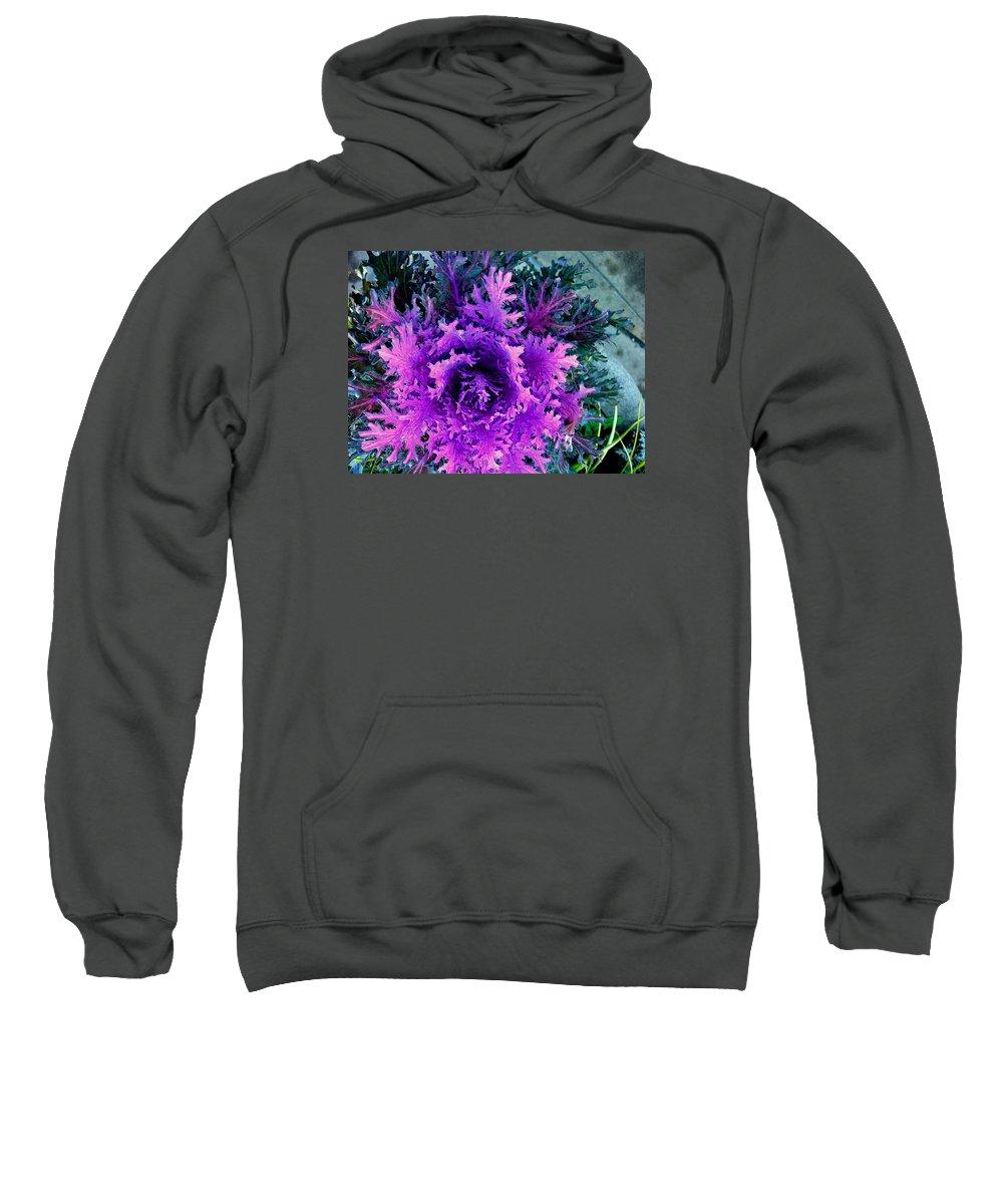 Plant Sweatshirt featuring the photograph Neon Purple by Maro Kentros