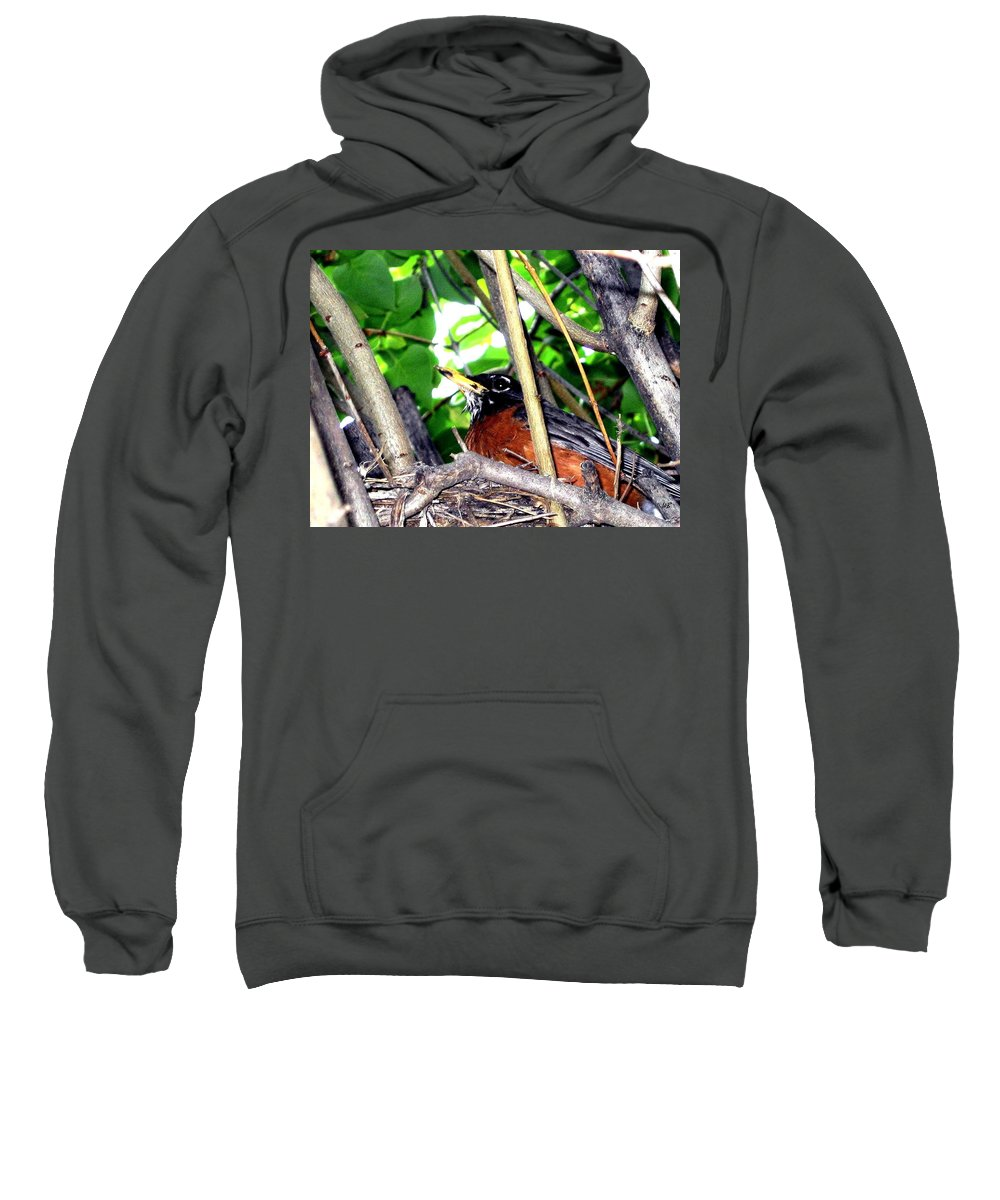 Robin Sweatshirt featuring the photograph Nesting Robin by Will Borden