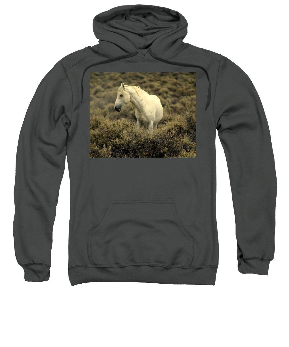 Wild Horses Sweatshirt featuring the photograph Nevada Wild Horses 4 by Marty Koch