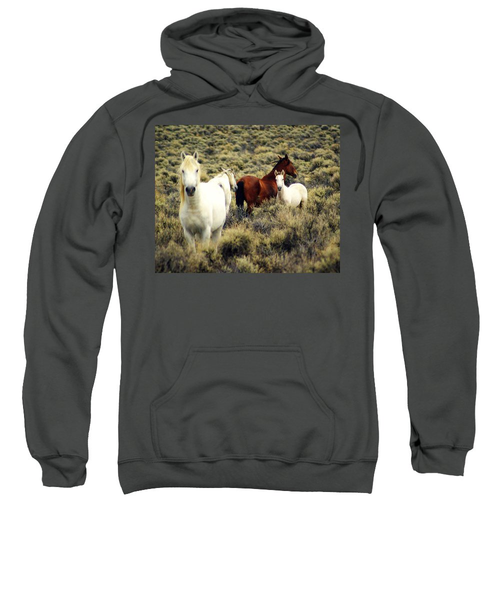 Horses Sweatshirt featuring the photograph Nevada Wild Horses by Marty Koch