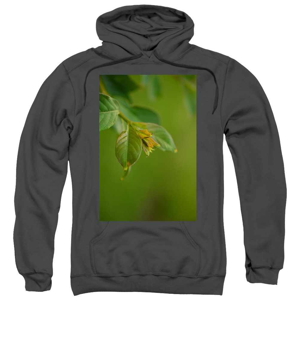 Landscape Sweatshirt featuring the photograph New Born Leaves by Ann Shaver