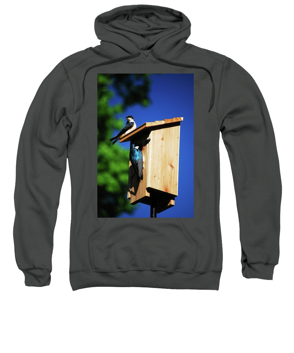 Tree Swallows Sweatshirt featuring the photograph New Home Inspection by Lori Tambakis