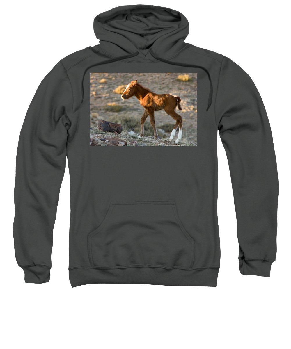 Horse Sweatshirt featuring the photograph New Legs by Kent Keller