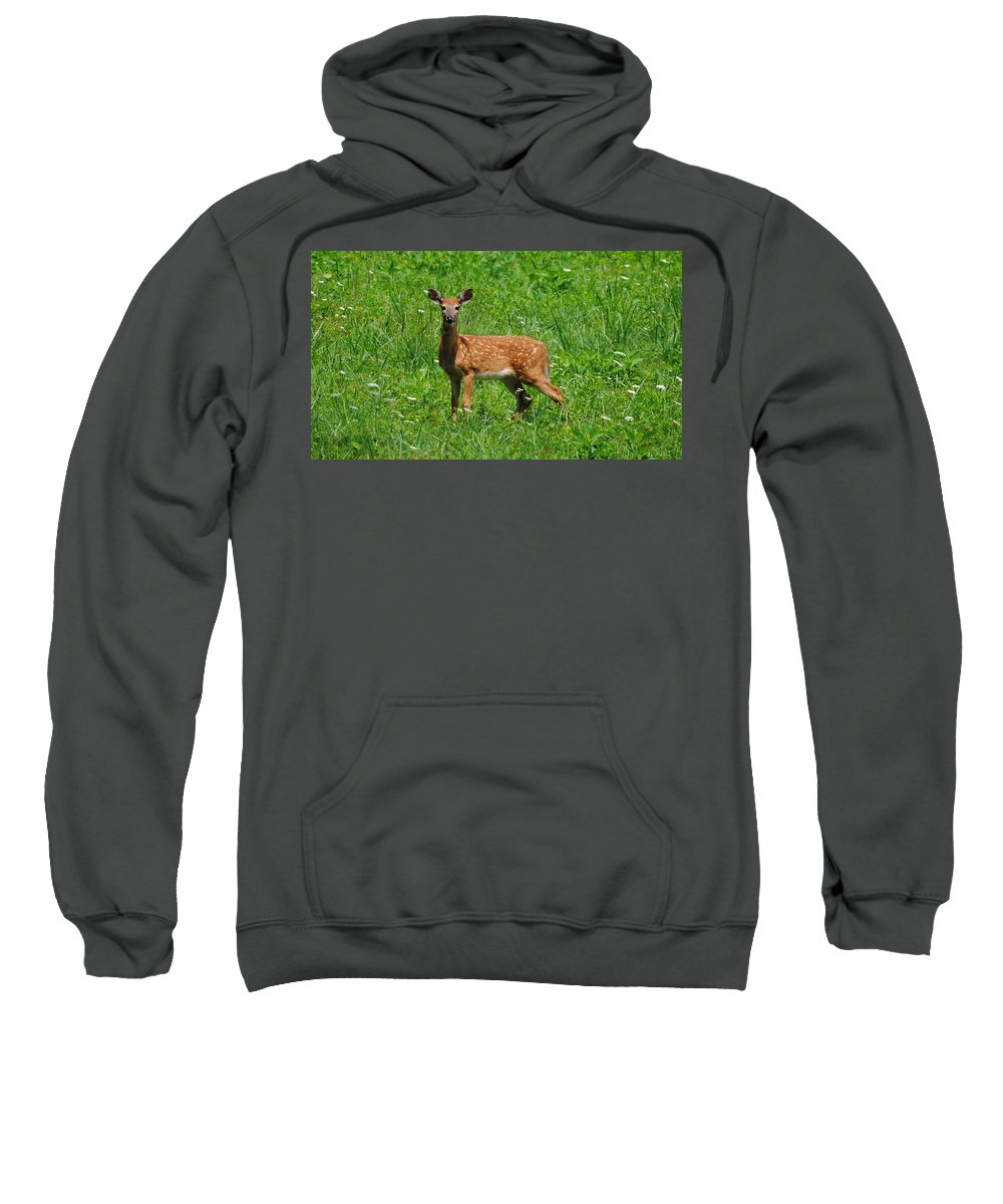 Fawn Sweatshirt featuring the photograph New Spots by Eric Liller