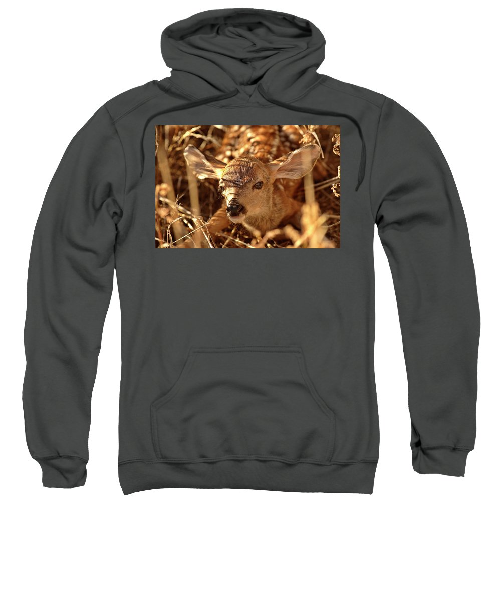 New Sweatshirt featuring the digital art Newly Born Fawn Hiding In A Saskatchewan Field by Mark Duffy