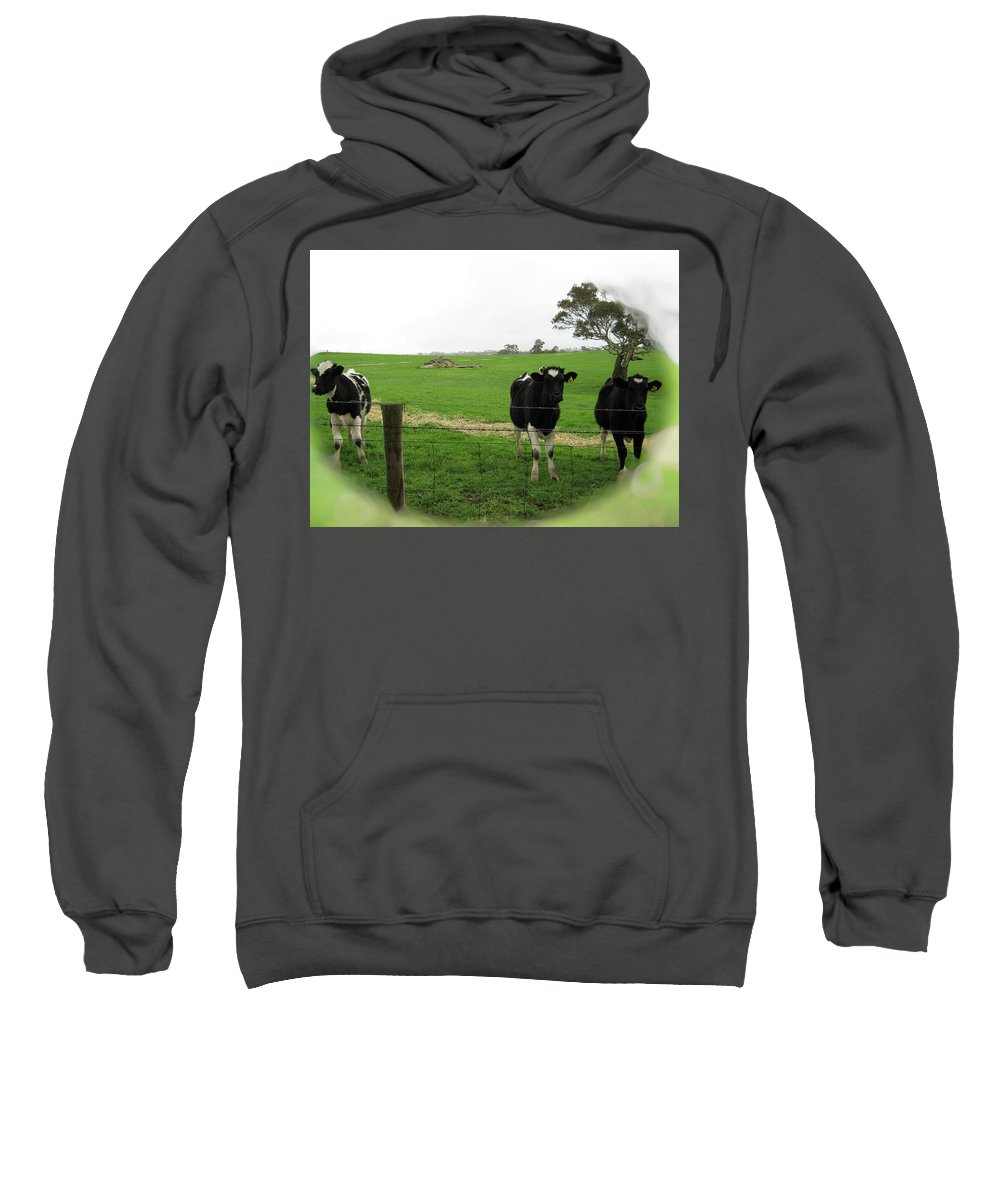Cows Sweatshirt featuring the photograph N'gombe by Douglas Barnard