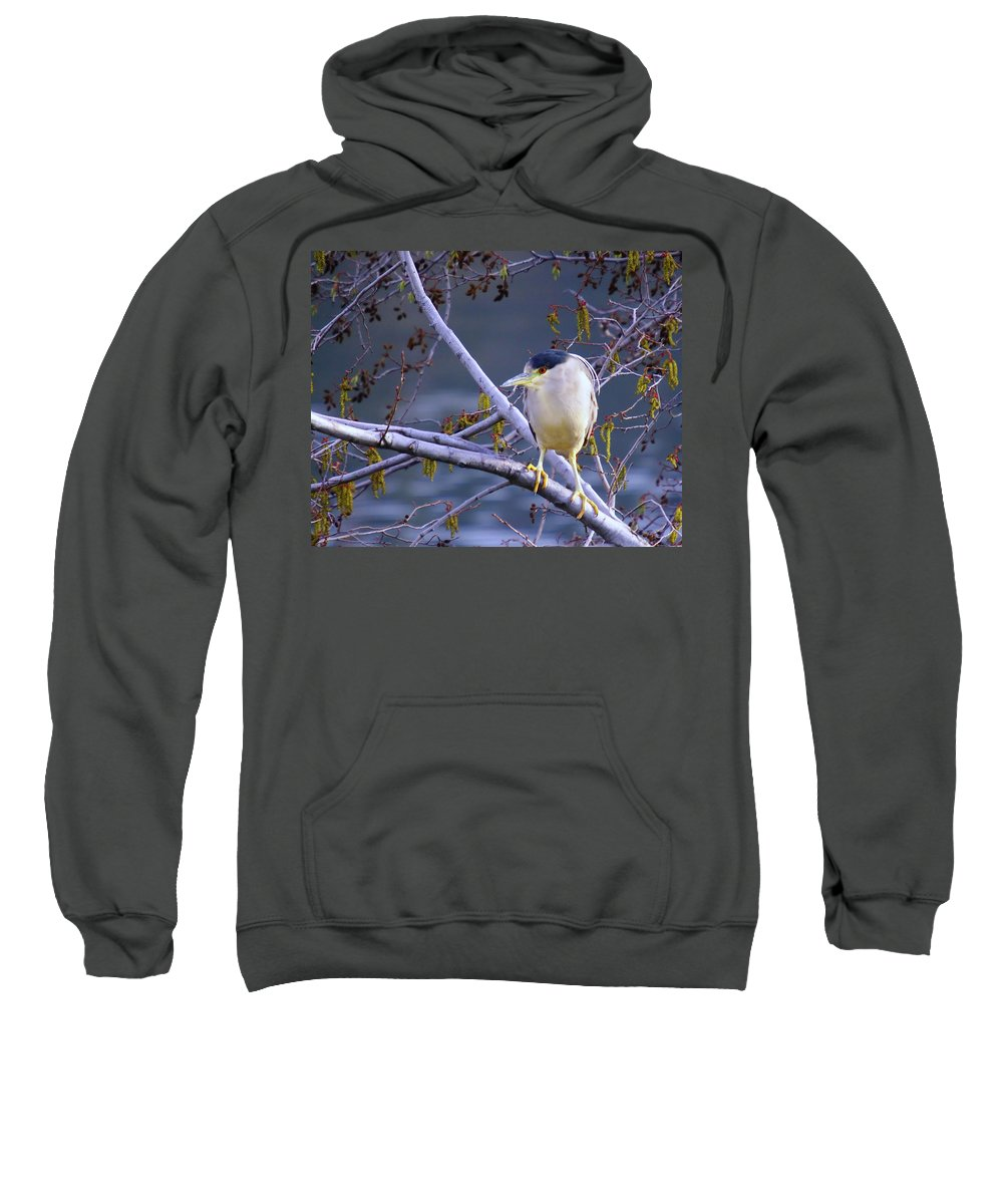 Birds Sweatshirt featuring the photograph Night Heron by Jeff Swan