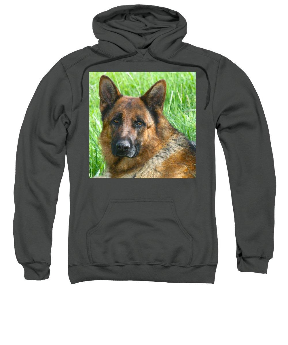 Dog Sweatshirt featuring the photograph Nobility by Karon Melillo DeVega
