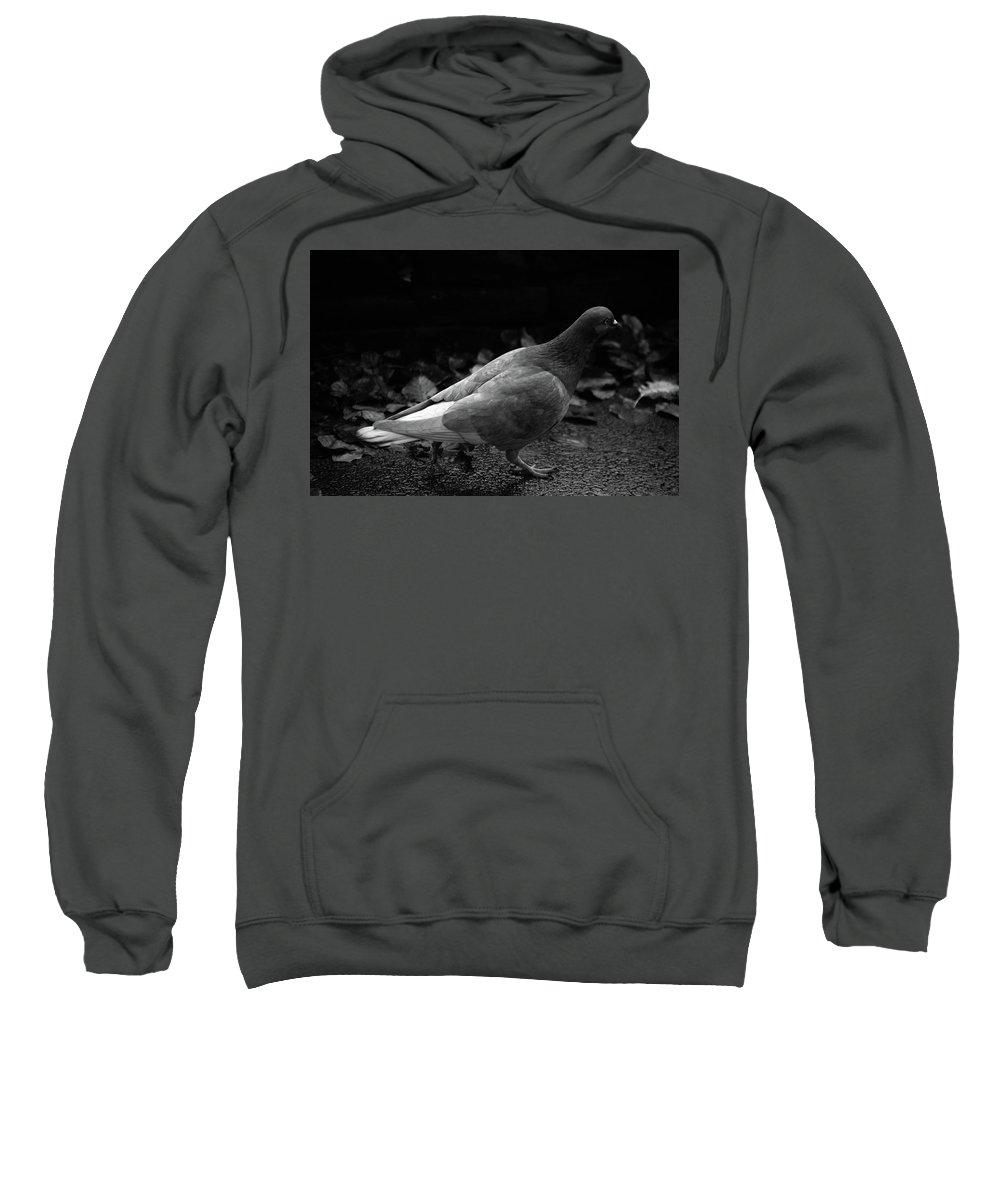 Hebden Sweatshirt featuring the photograph Noigip by Jez C Self