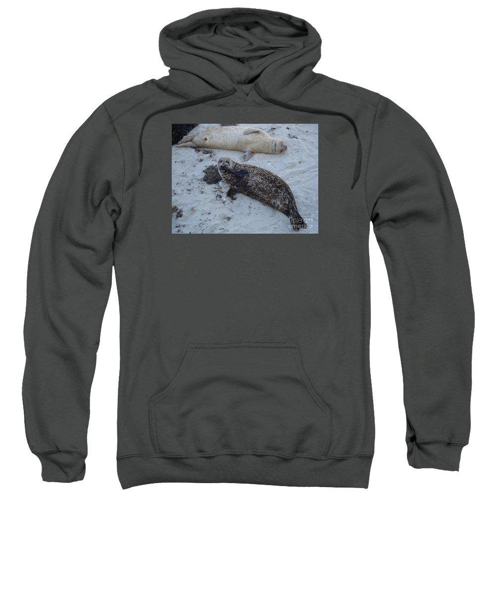 Seals Sweatshirt featuring the photograph Nom Nom Nom by Madilyn Fox