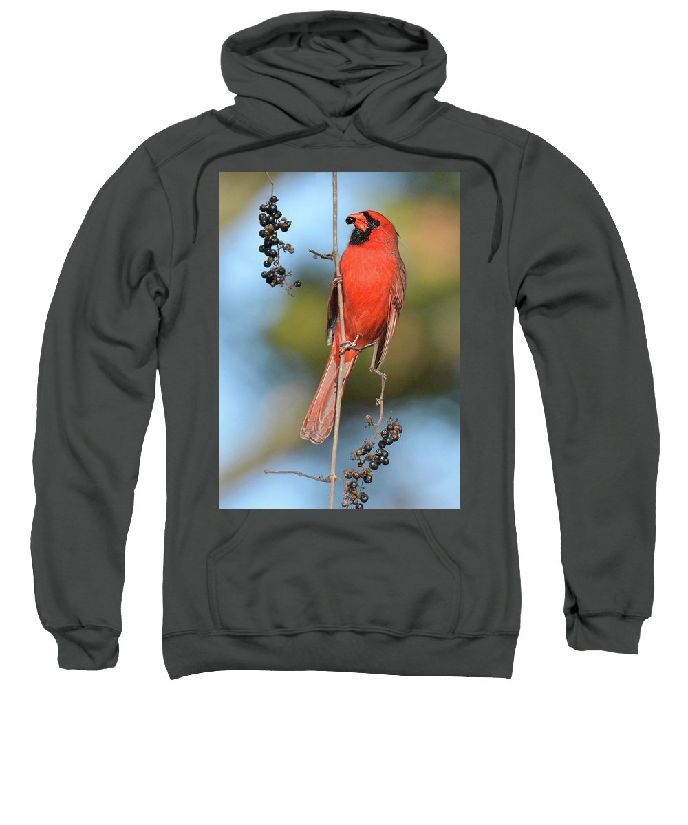 Bird Sweatshirt featuring the photograph Northern Cardinal With Berry by Alan Lenk