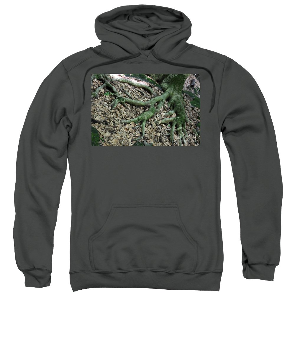 Trees Sweatshirt featuring the photograph Nourishment by Amanda Barcon