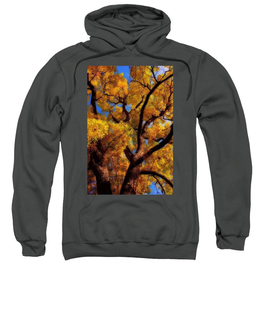 Cottonwood Sweatshirt featuring the photograph October Day Dream by James BO Insogna
