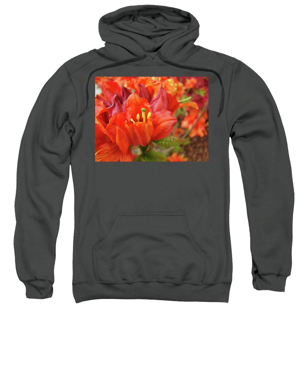 Orange Sweatshirt featuring the photograph Office Art Prints Orange Azalea Flowers 20 Giclee Prints Baslee Troutman by Baslee Troutman