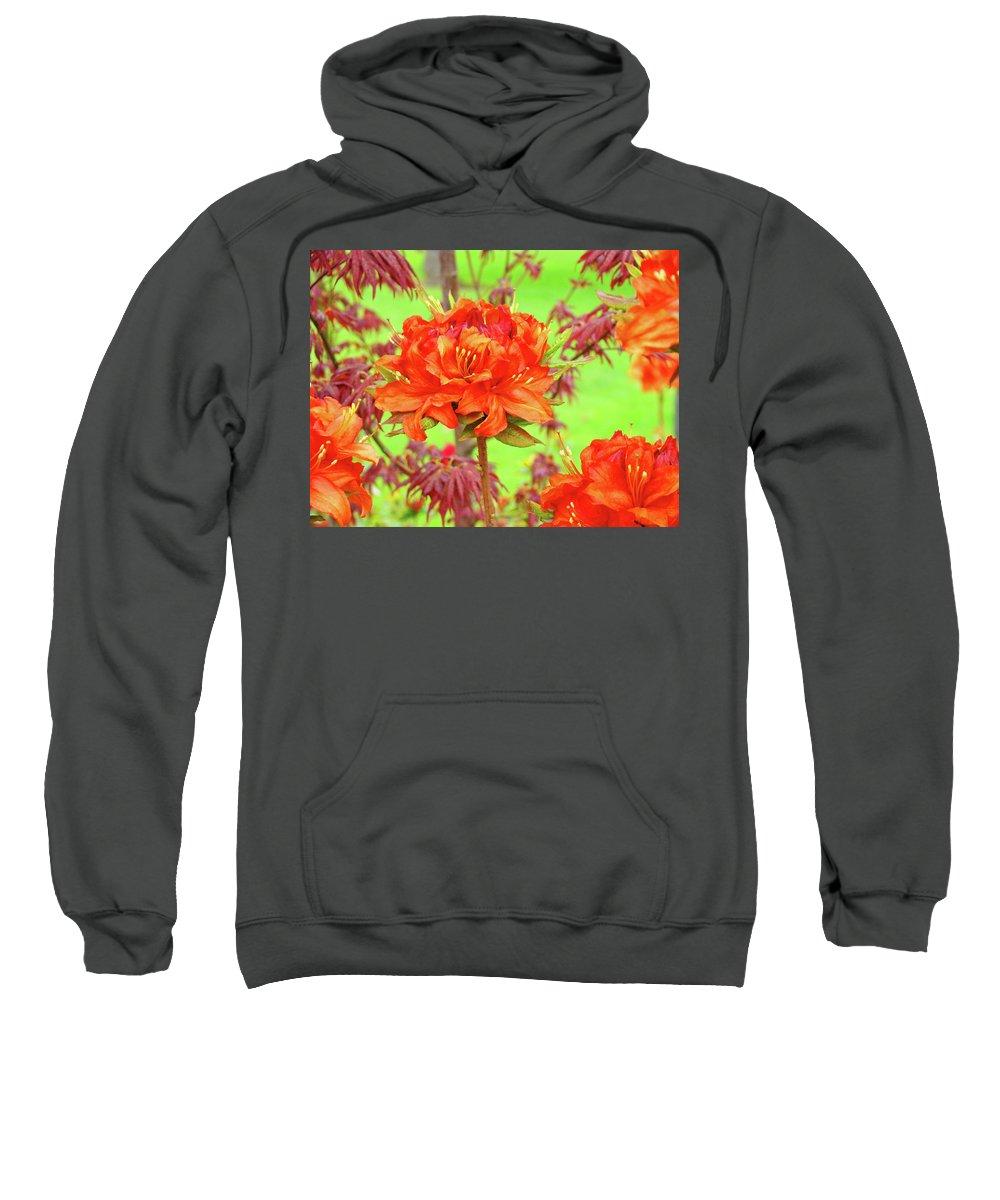 �azaleas Artwork� Sweatshirt featuring the photograph Office Art Prints Orange Azalea Flowers Landscape 13 Giclee Prints Baslee Troutman by Baslee Troutman