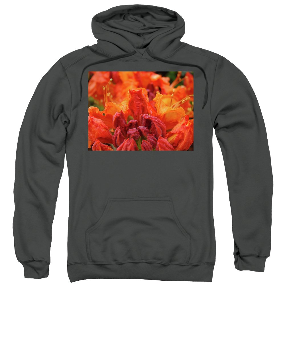 �azaleas Artwork� Sweatshirt featuring the photograph Office Art Prints Orange Azaleas Flowers 9 Giclee Prints Baslee Troutman by Baslee Troutman