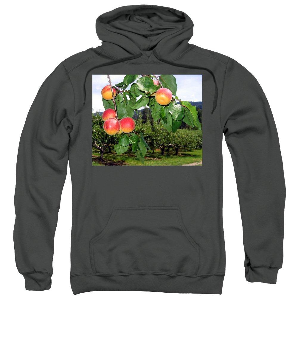 Apricots Sweatshirt featuring the digital art Okanagan Apricots by Will Borden