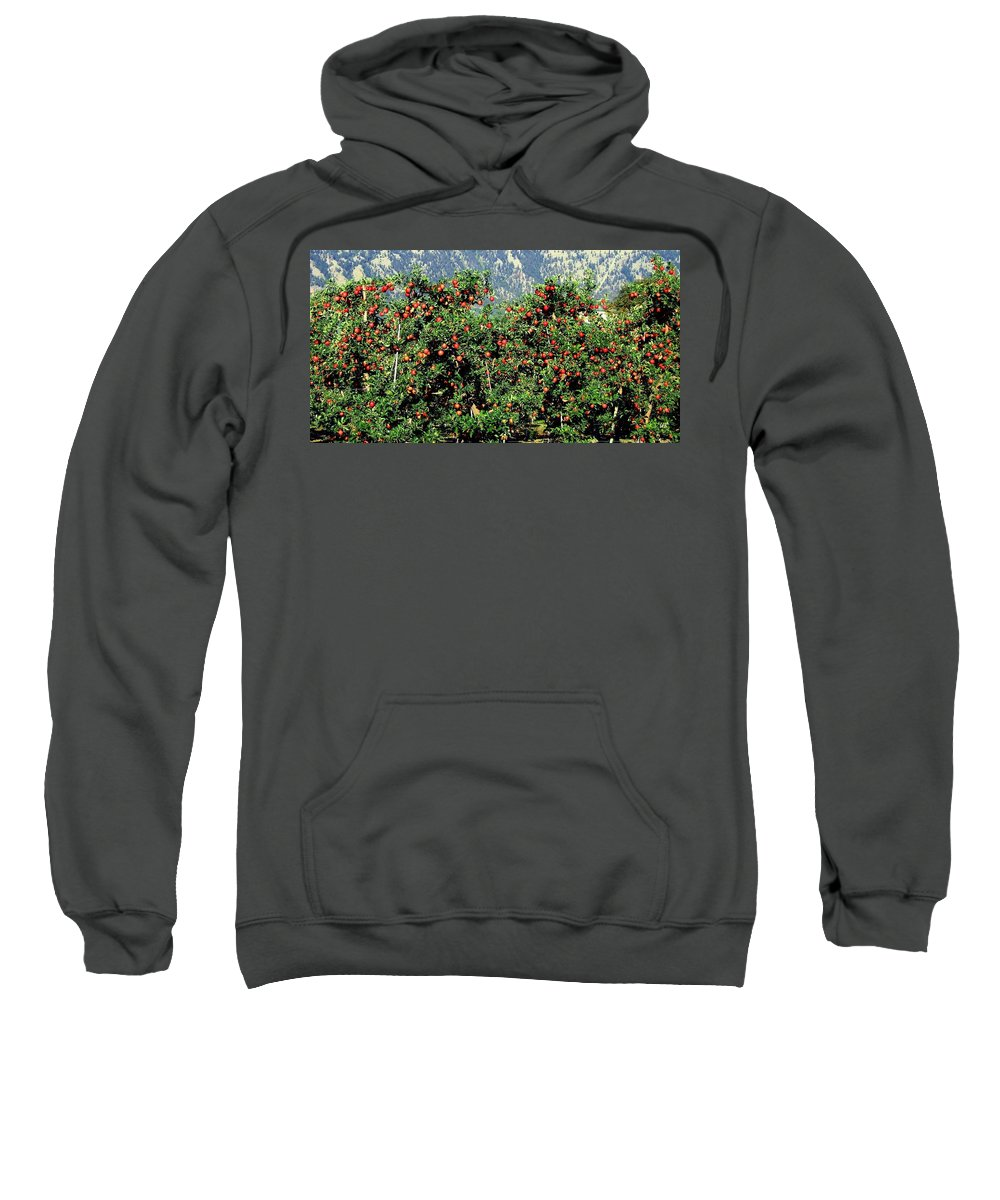 Apples Sweatshirt featuring the photograph Okanagan Valley Apples by Will Borden
