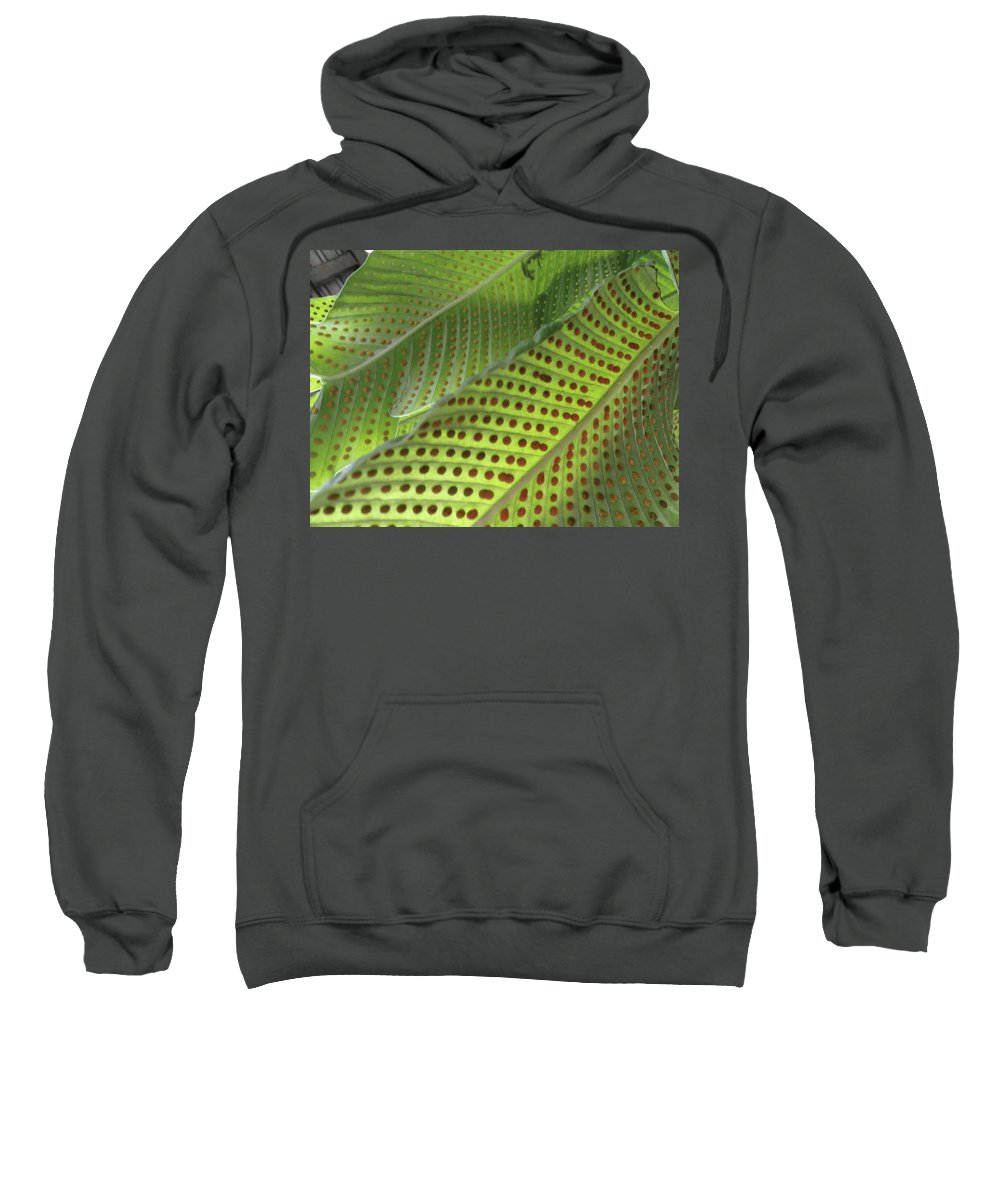 Tropical Plants Sweatshirt featuring the photograph On The Dotted Lines by Trish Hale