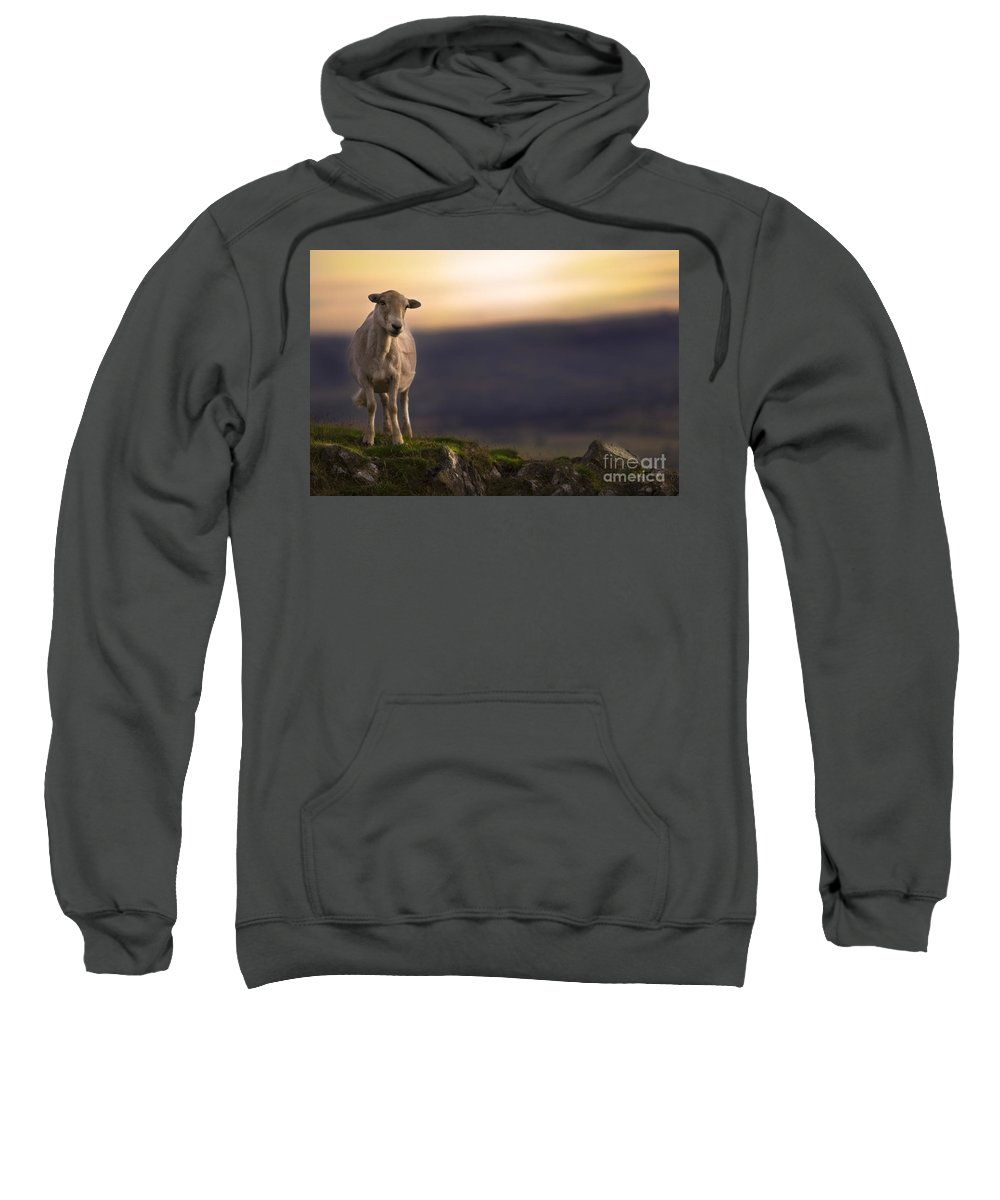 Sheep Sweatshirt featuring the photograph On The Top Of The Hill by Angel Tarantella