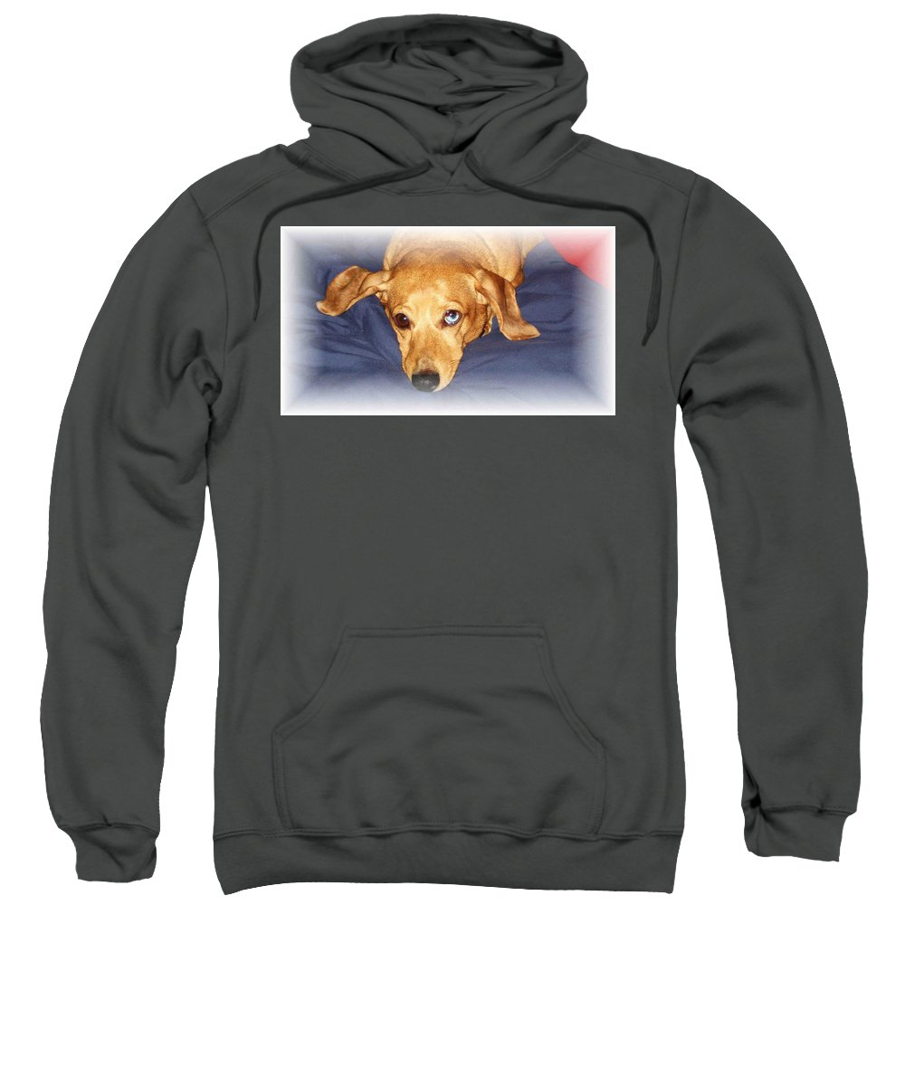 Dachshund Sweatshirt featuring the photograph One Blue Eye by Nelson Strong