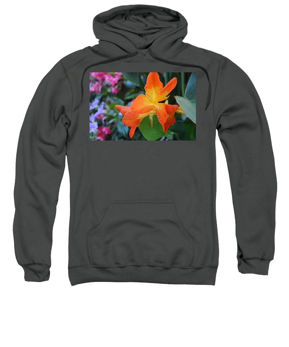 Orange And Yellow Canna Lily 2 Sweatshirt featuring the photograph Orange And Yellow Canna Lily 2 by Warren Thompson