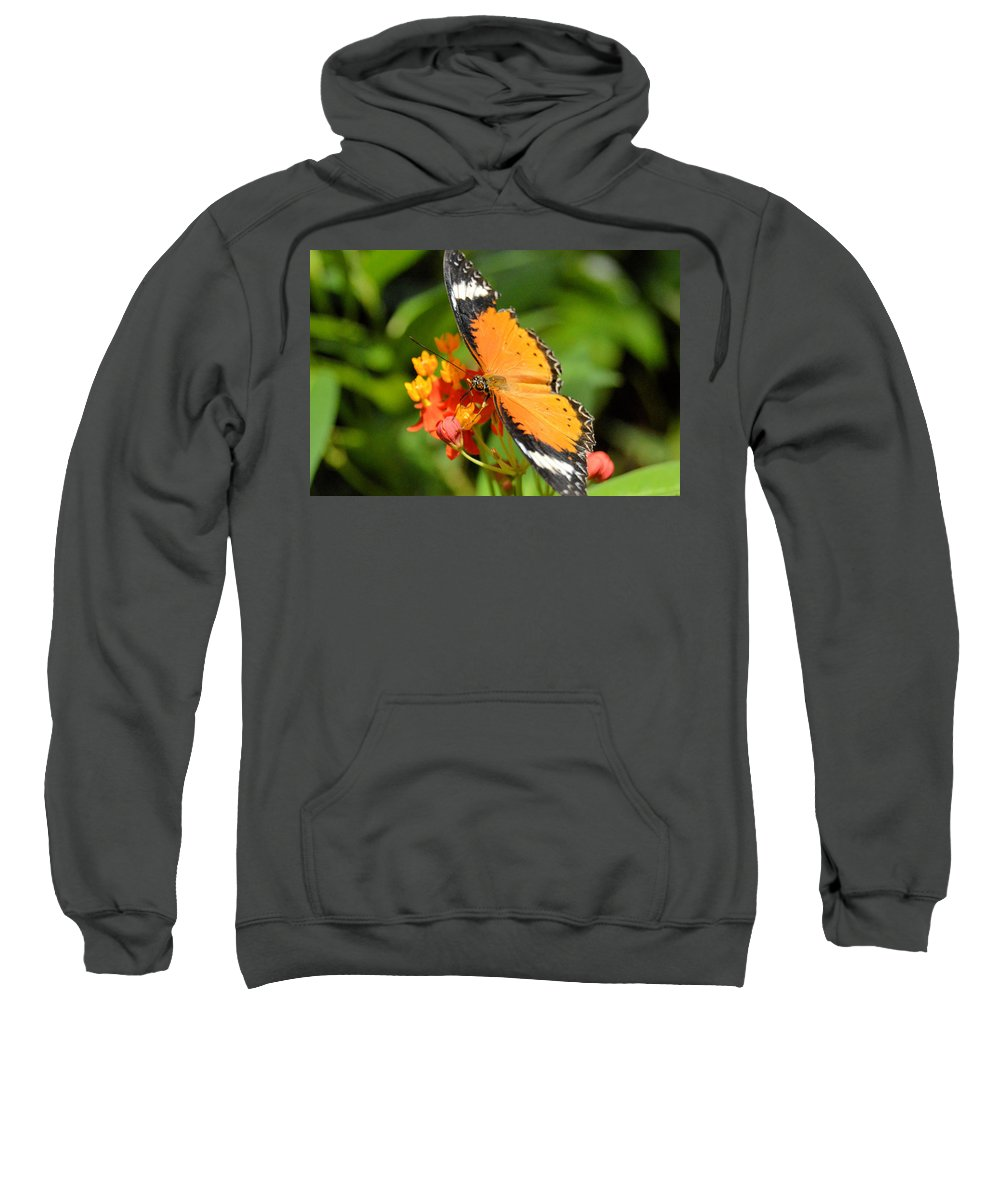 Flower Sweatshirt featuring the photograph Orange Butterfly by Wendy Fox