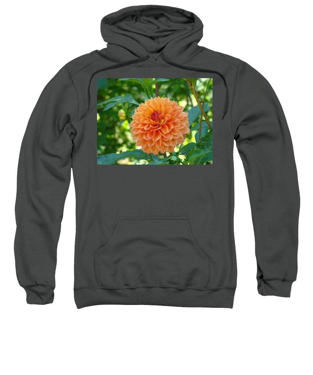 Dahlia Sweatshirt featuring the photograph Orange Dahlia Master Gardeners Art Collection Baslee Troutman by Baslee Troutman