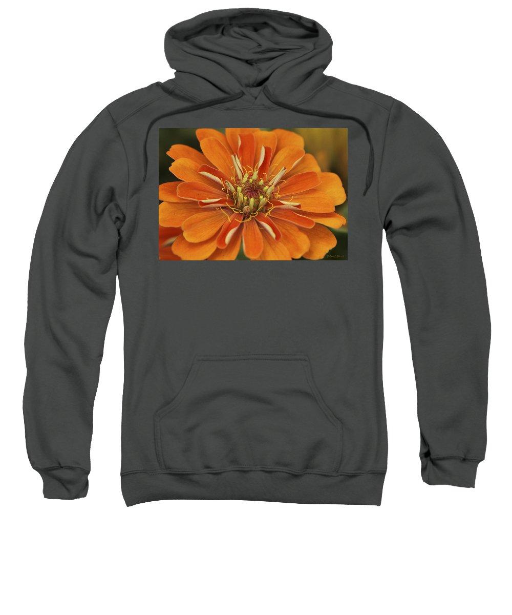 Flower Sweatshirt featuring the photograph Orange Orange Orange by Deborah Benoit