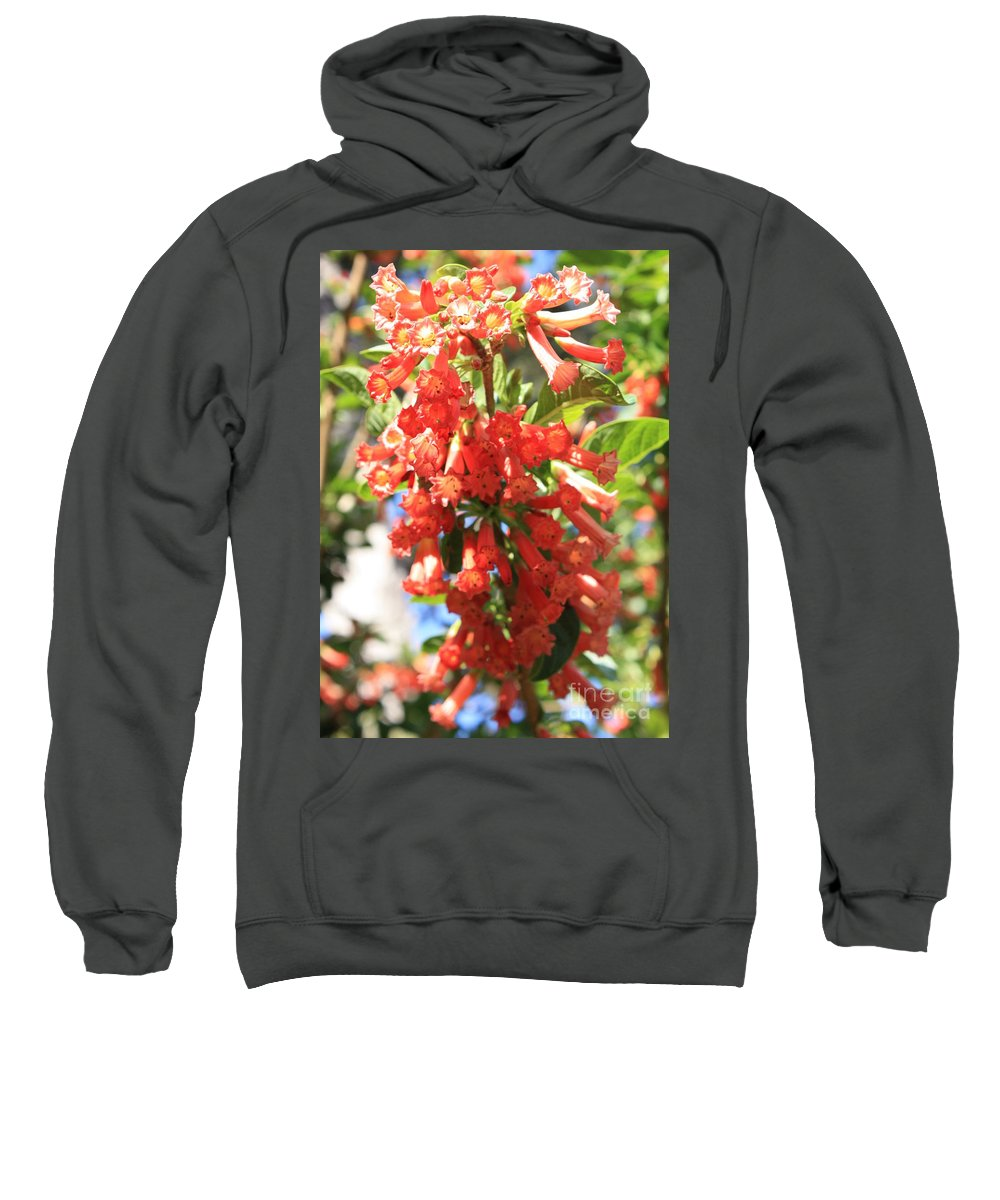 Orange Trumpet Flower Sweatshirt featuring the photograph Orange Trumpet Flower by Carol Groenen