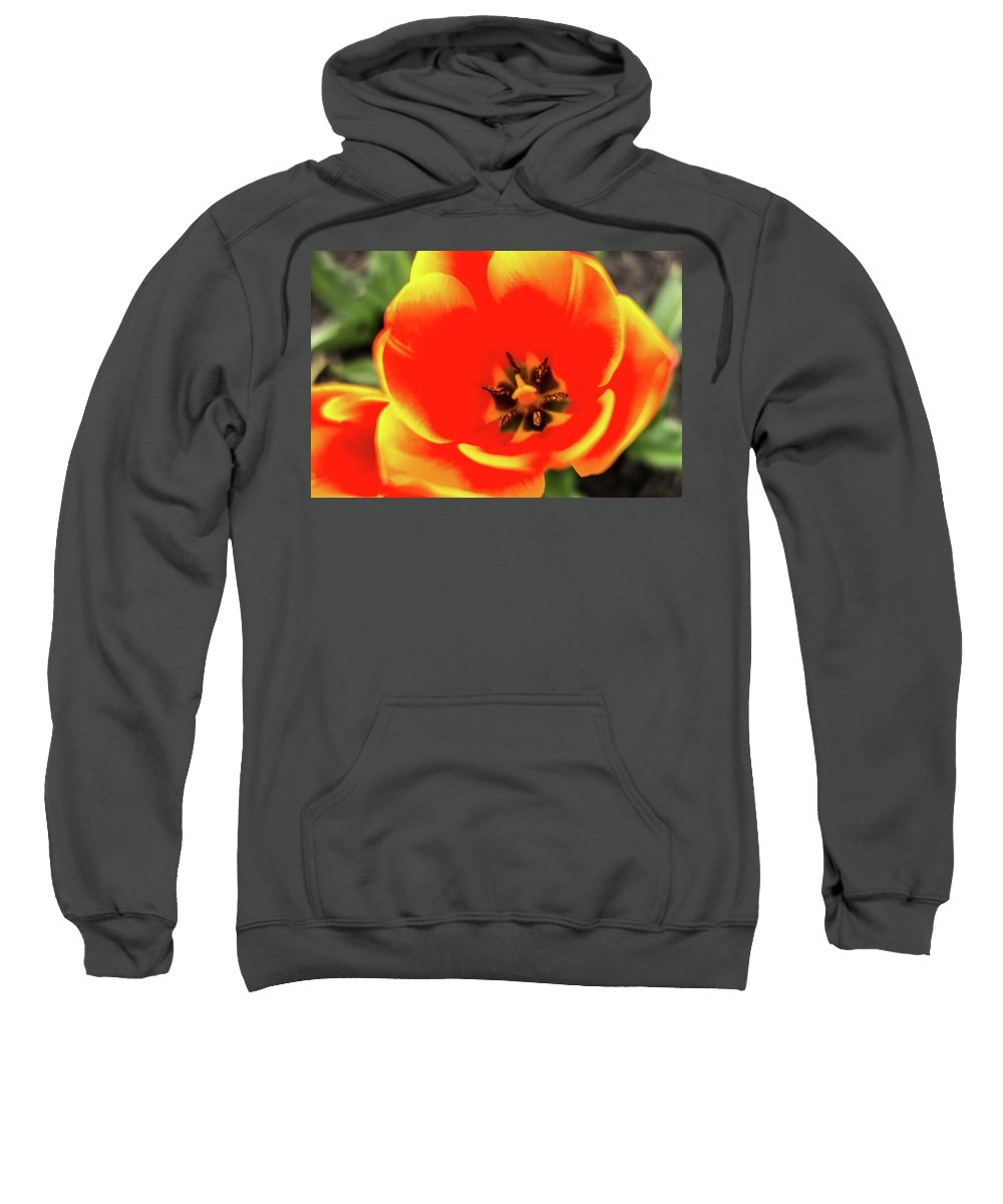 Tulip Sweatshirt featuring the photograph Orange Tulip Flowers In Spring Garden by Alex Grichenko