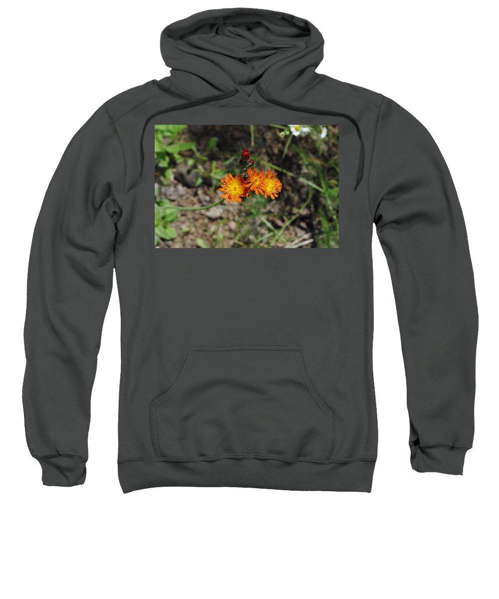 Orange Sweatshirt featuring the photograph Orange Wild Flowers by Alice Markham
