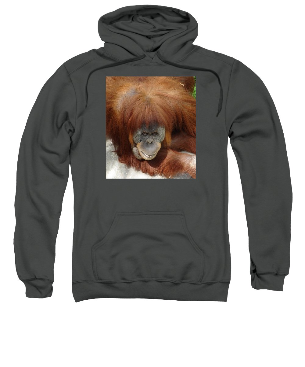 Red Ape Eyes Sweatshirt featuring the photograph Orangutan by Luciana Seymour