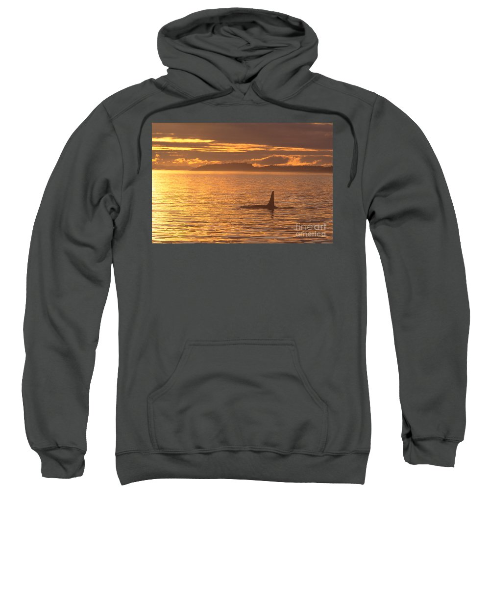 Animal Art Sweatshirt featuring the photograph Orca Killer Whale by John Hyde - Printscapes