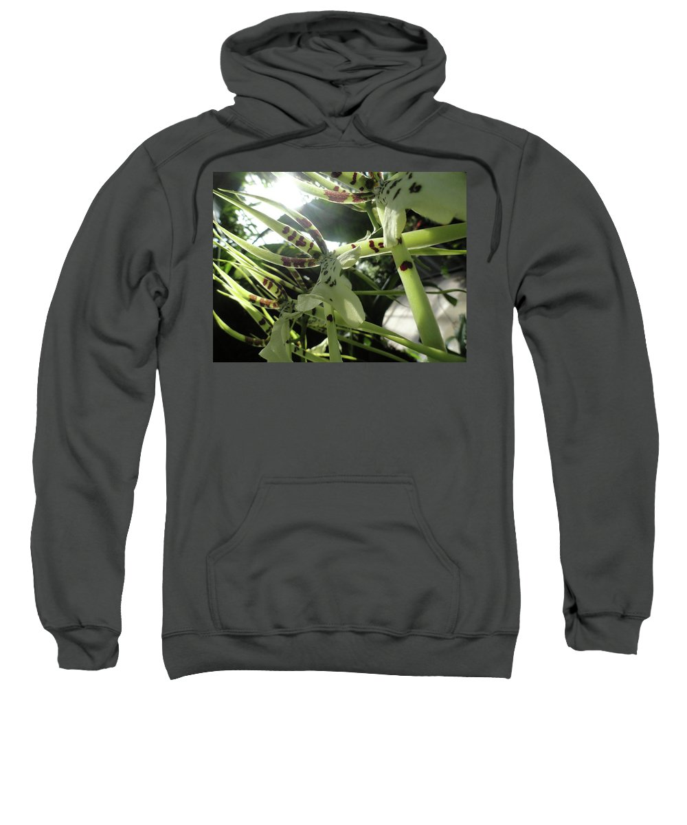 Orchid Sweatshirt featuring the photograph Orchid Lumin by Trish Hale