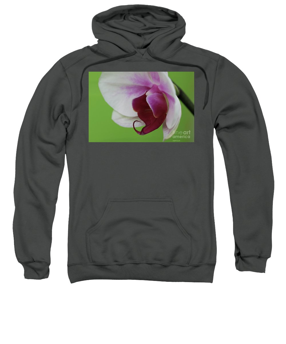 Orchid Sweatshirt featuring the photograph Orchid On Green by Deborah Benoit