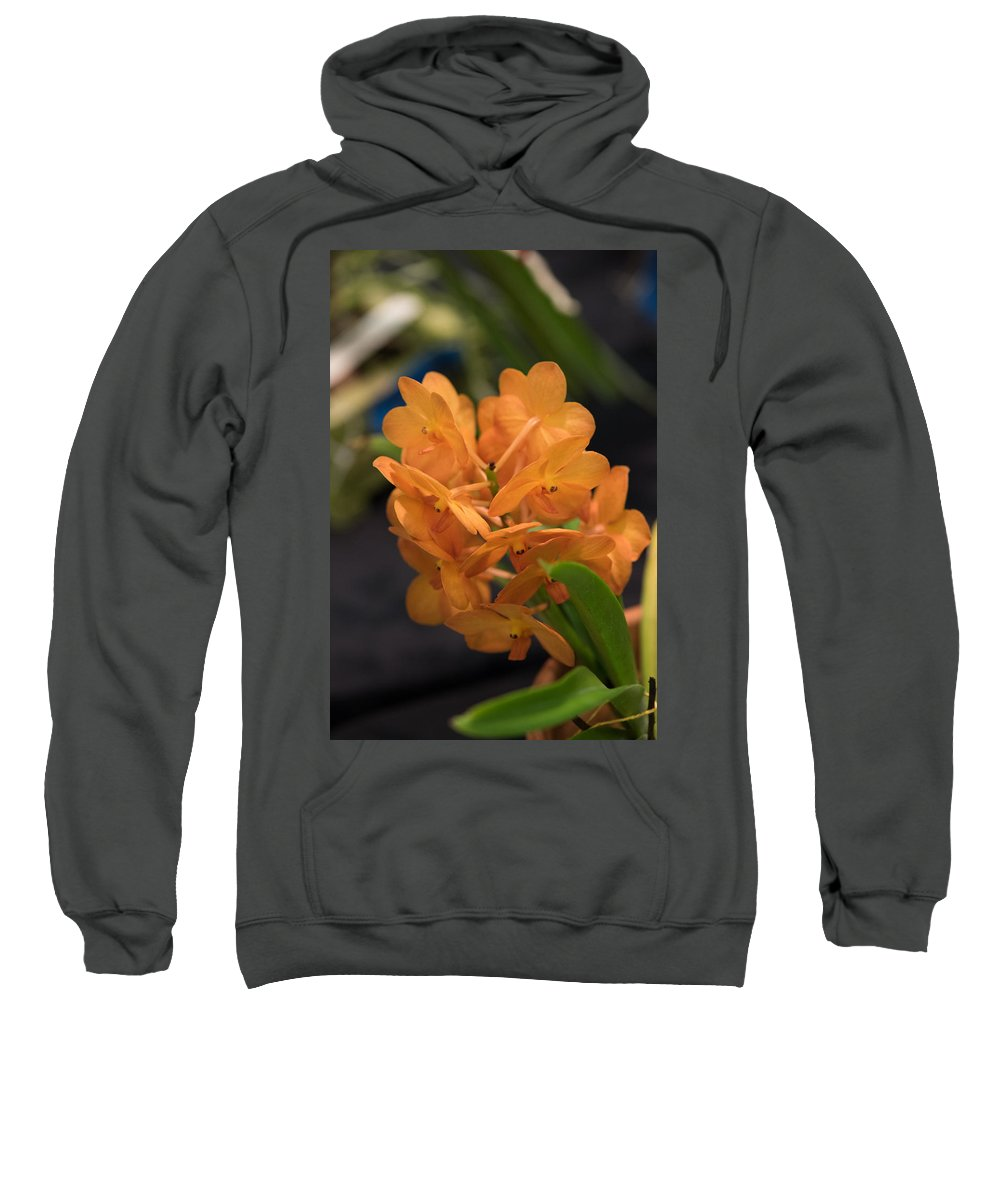 2016 Orchid Society Show Sweatshirt featuring the photograph Orchid Yip Sum Wah Orange by JG Thompson