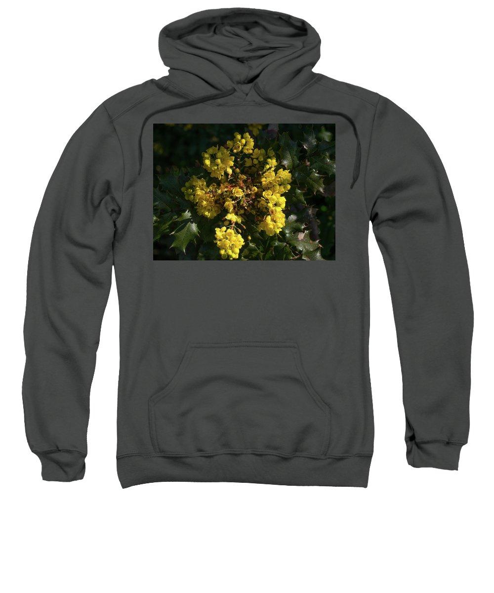 Flowers Sweatshirt featuring the photograph Oregon Grape Flowers by Kathy Benham