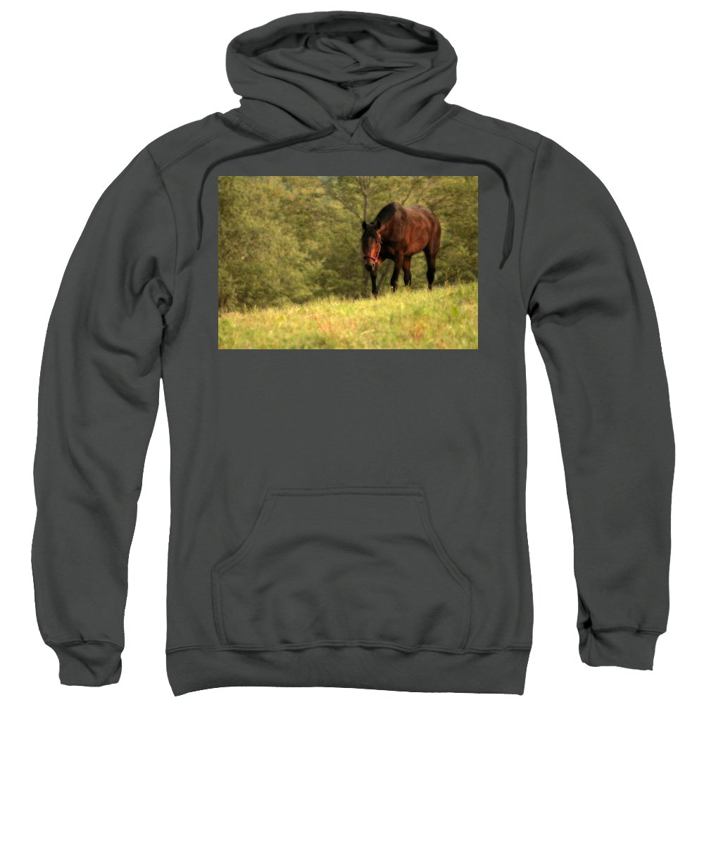 Horse Sweatshirt featuring the photograph Over The Hill by Angela Rath