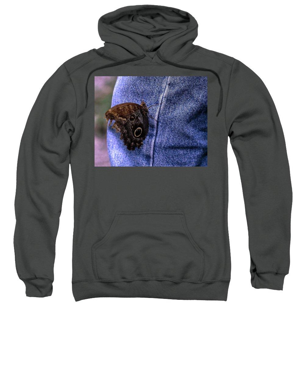 Owl Butterfly On Jeans Sweatshirt featuring the photograph Owl Butterfly On Jeans by Sally Weigand