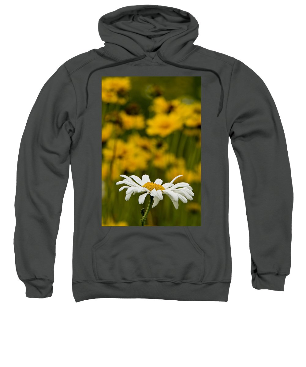 Ox Eyed Daisy Sweatshirt featuring the photograph Ox Eyed Daisy 2 by Michael Cummings