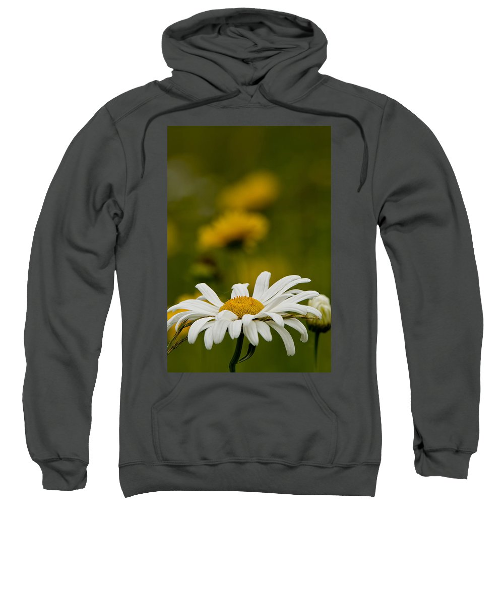 Ox Eyed Daisy Sweatshirt featuring the photograph Ox Eyed Daisy by Michael Cummings