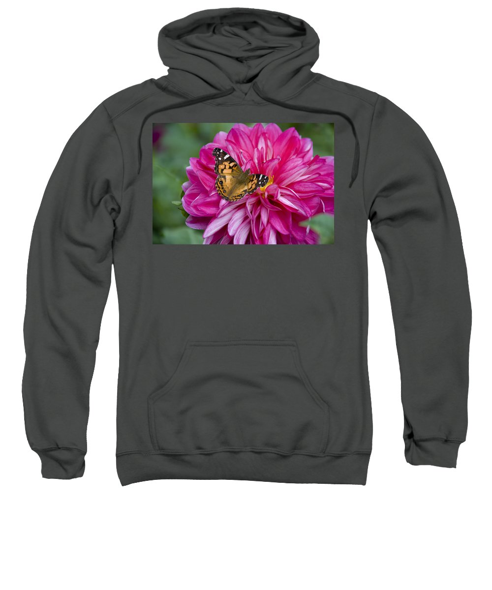 Painted Lady Sweatshirt featuring the photograph Painted Lady On Dahlia by Charles Harden