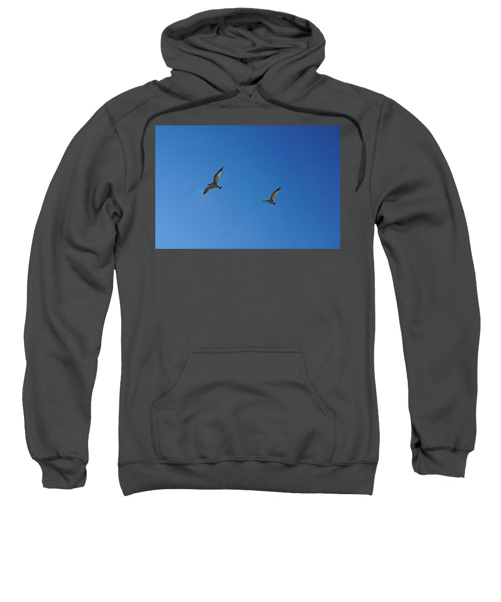 Bird Sweatshirt featuring the photograph Pair In Flight by Colleen Fox