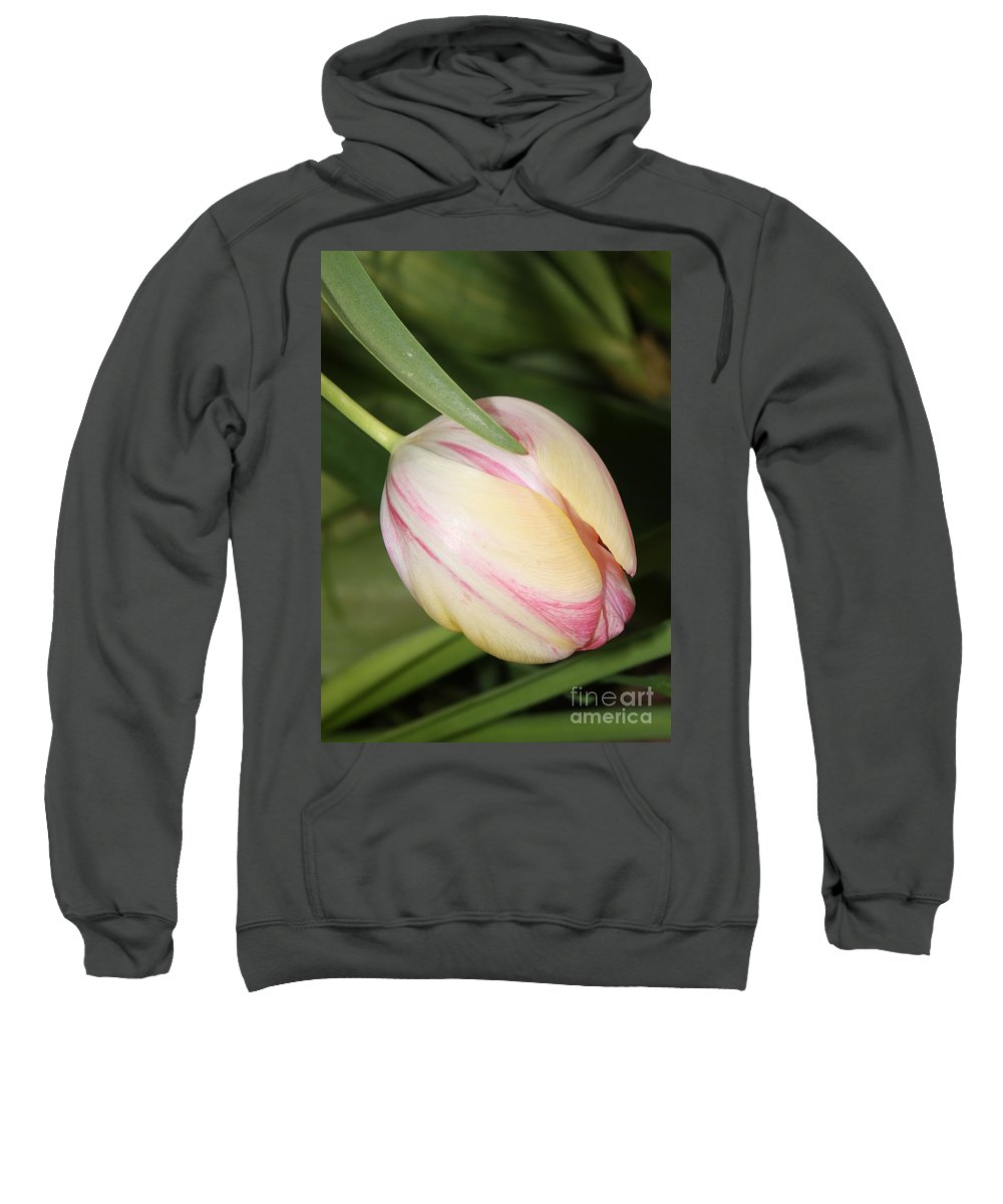 Tulip Sweatshirt featuring the photograph Pale Yellow And Pink Tulip by Carol Groenen