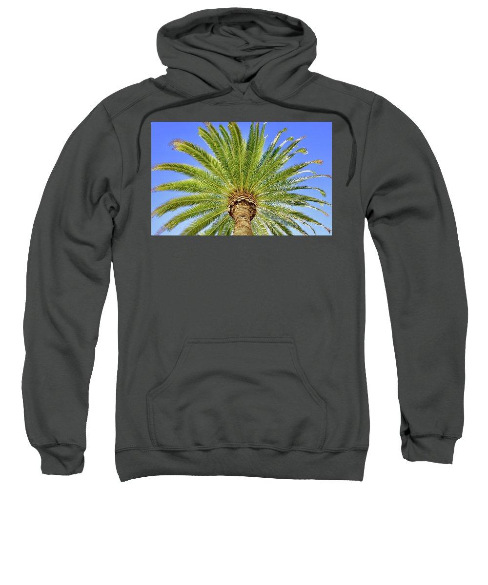Nature Sweatshirt featuring the photograph Palm Tree by Lorna Maza