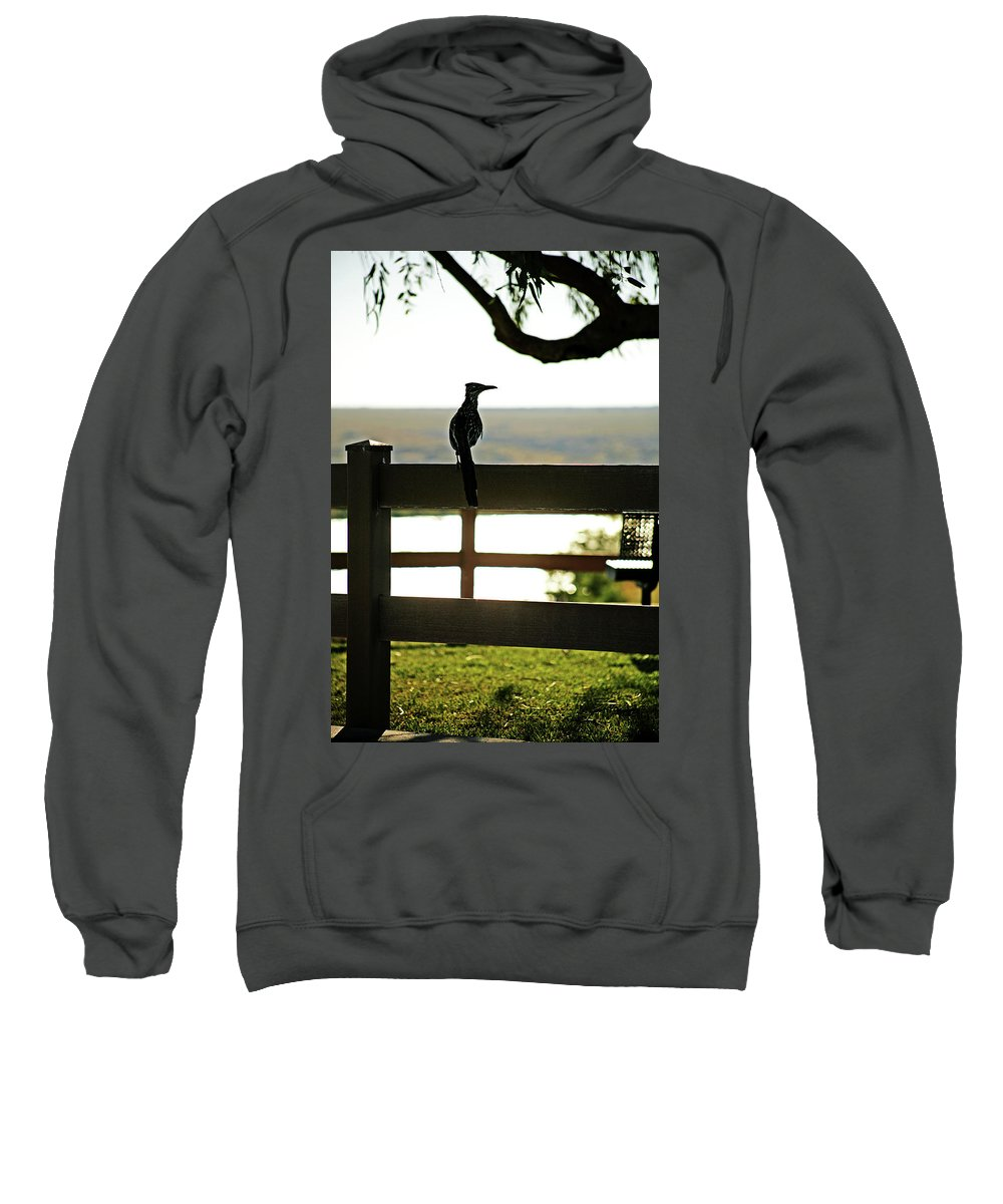 Animal Sweatshirt featuring the photograph Park Roadrunner by Charles Benavidez