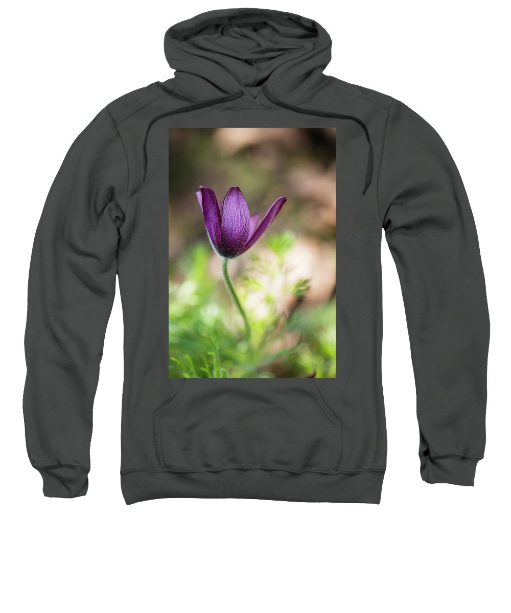 August Sweatshirt featuring the photograph Pasque Flower by David Taylor