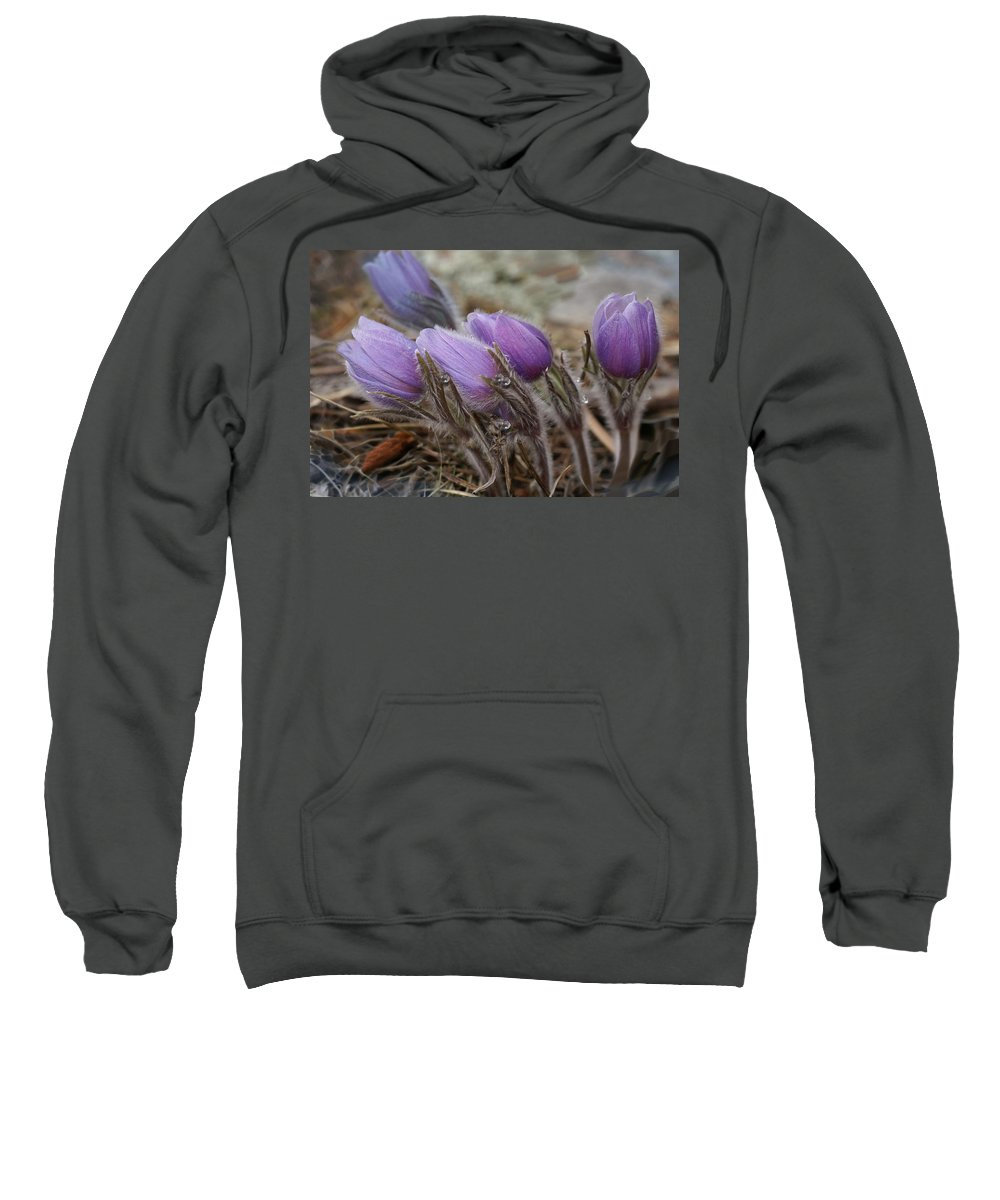 Pasque Flower Sweatshirt featuring the photograph Pasque Flower Watercolor by Heather Coen